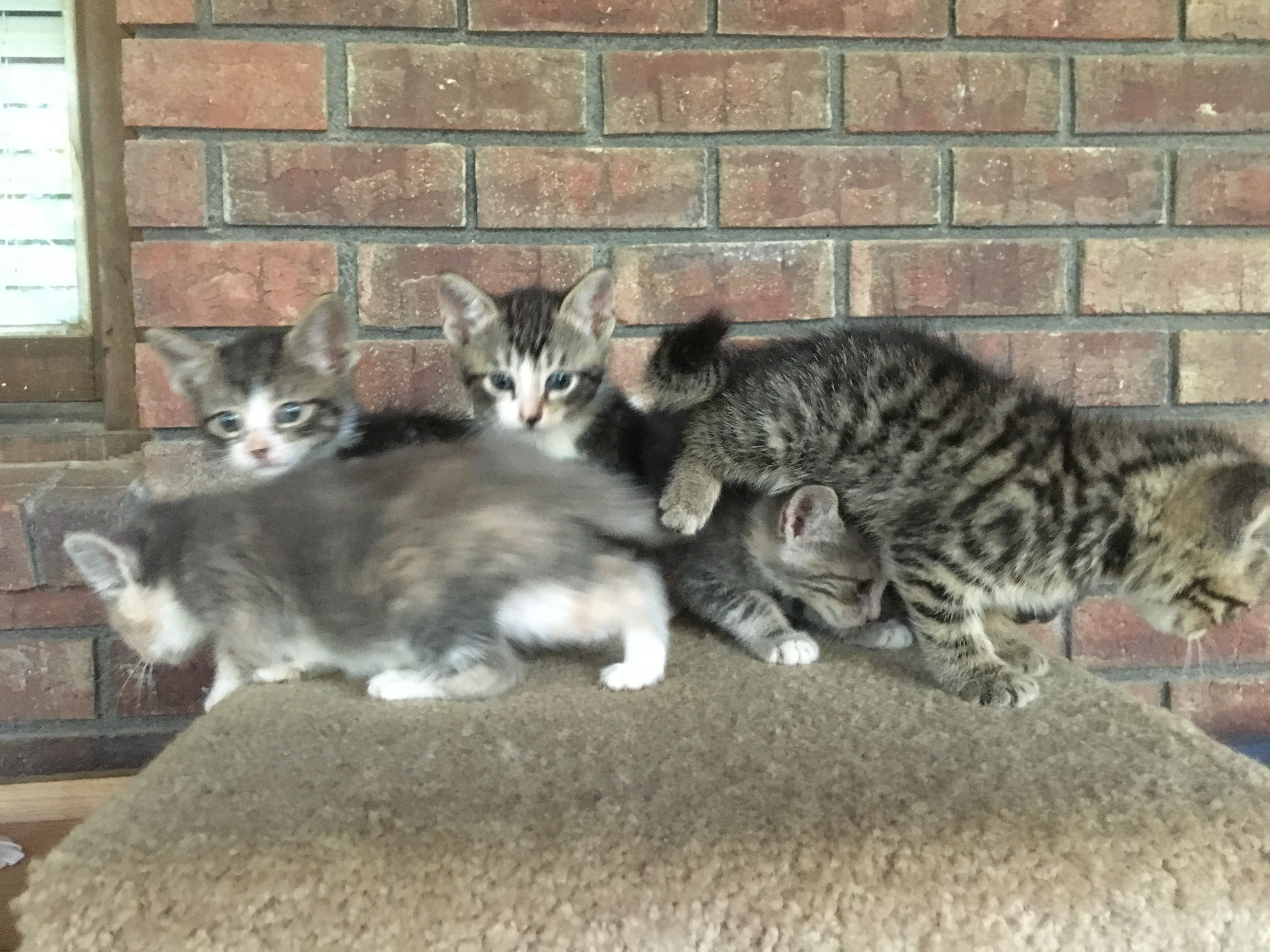 Seven kittens are looking for a new home.